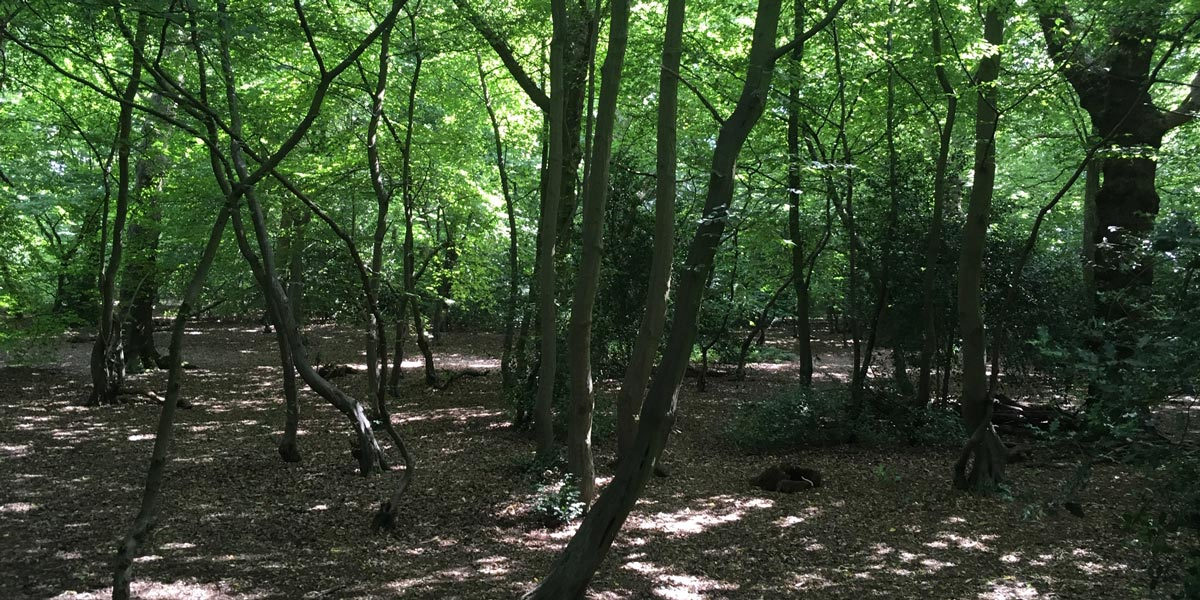 How to do forest bathing in London